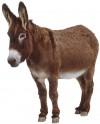 d-donkey