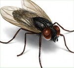 i-insect