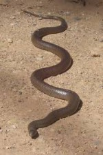insect snake