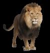l-lion
