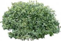 nature-bush
