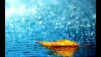 nature-rain