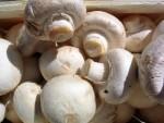 vegetable mushroom