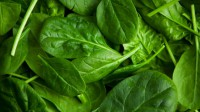 vegetable spinach